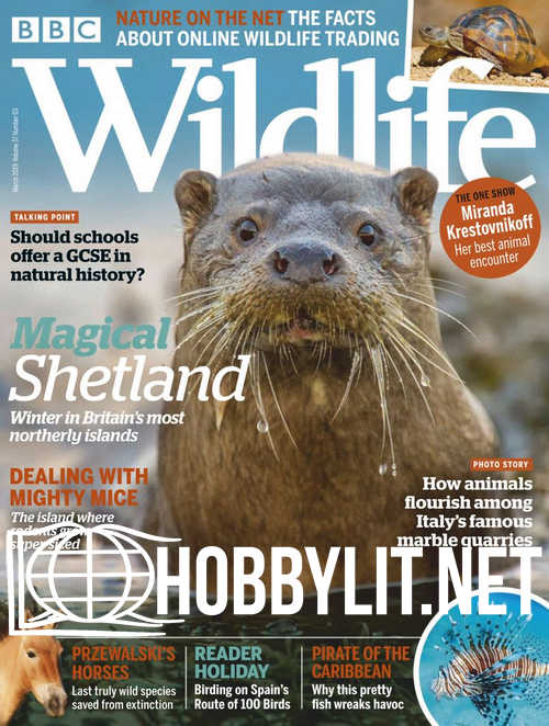 Wildlife - March 2019