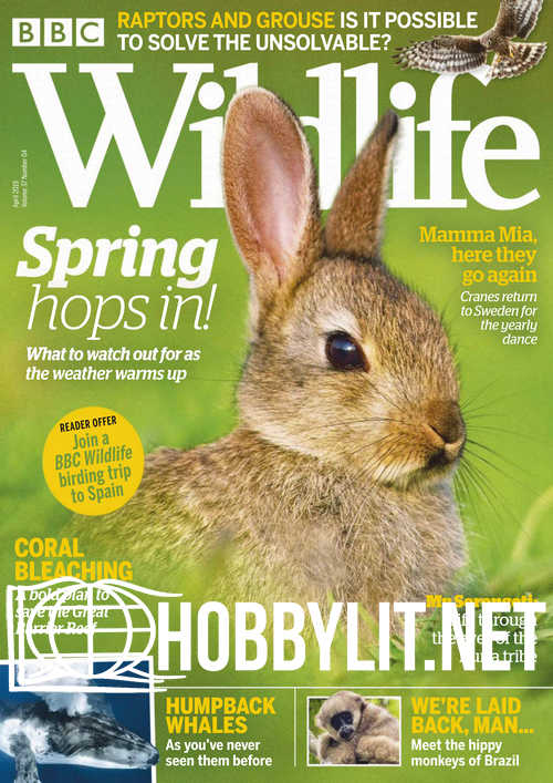 Wildlife - April 2019