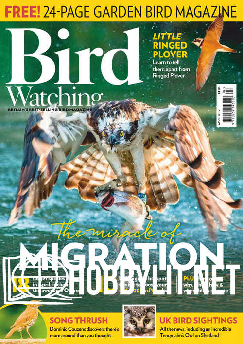 Bird Watching - April 2019