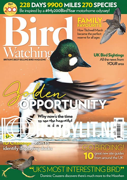 Bird Watching - January 2020